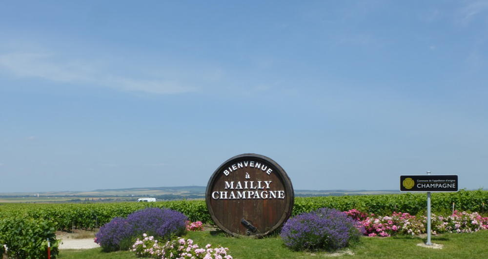 Champagne tasting and visit winery